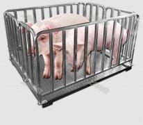 养殖场称重猪牛羊电子地磅